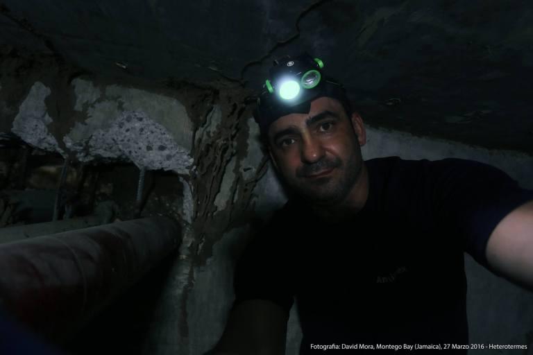 David Mora junto a curiosa estructura de canales realizados por Heterotermes en Jamaica