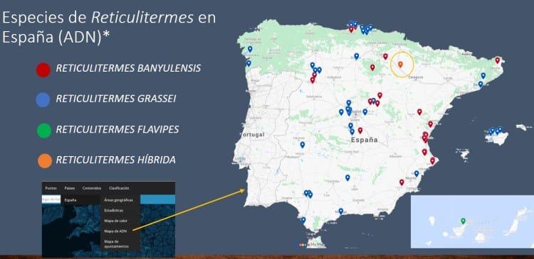 Imagen 13- Mapa de termitas por especies de Reticulitermes tras análisis de ADN