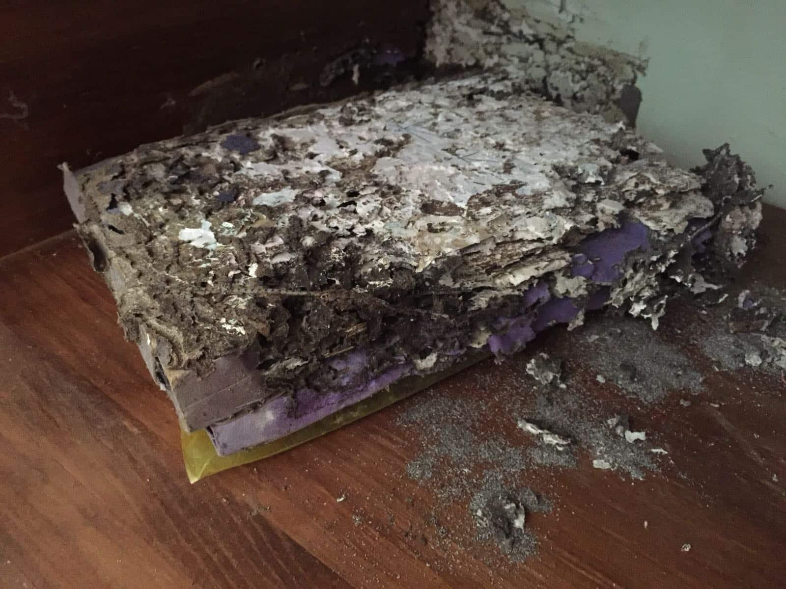 Libros comidos por las termitas