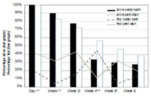 Figura 4. Porcentaje de cepa de chinches de laboratorio que se alimentan y que estaban vivas (n = 80) después de la oferta semanal de una comida de sangre. * El porcentaje alimentado fue significativamente diferente (P ≤ 0.05); *** El porcentaje alimentado y vivo fue significativamente diferente (P ≤ 0,05).