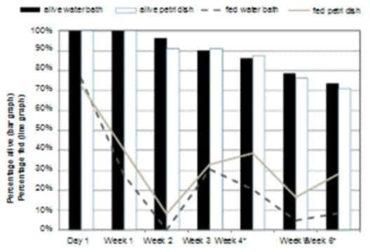 Figura 5. Porcentaje de chinches de la cepa de campo que se alimentaron y que estaban vivas (n = 80) después de la ofrenda semanal de una comida de sangre de 30 min. * El porcentaje alimentado fue significativamente diferente (P ≤ 0,05).