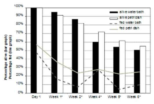 Figura 6. Datos combinados para el porcentaje de chinches de cepas de laboratorio y de campo que se alimentaron y estaban vivas (n = 80) después de la oferta semanal de una comida de sangre de 30 min. * El porcentaje alimentado fue significativamente diferente (P ≤ 0.05); ** El porcentaje vivo fue significativamente diferente (P ≤ 0,05).