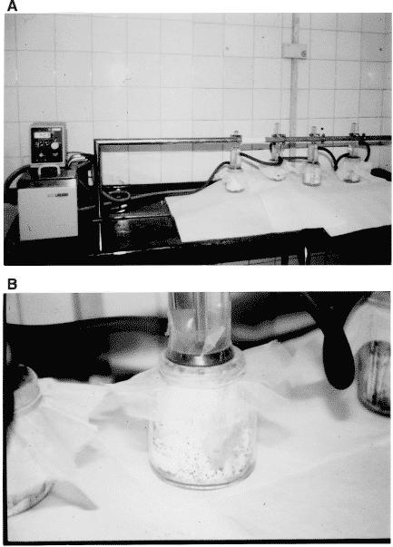 Fig. 2.(A) Sistema de alimentación artificial. (B) Alimentación artificial en detalle