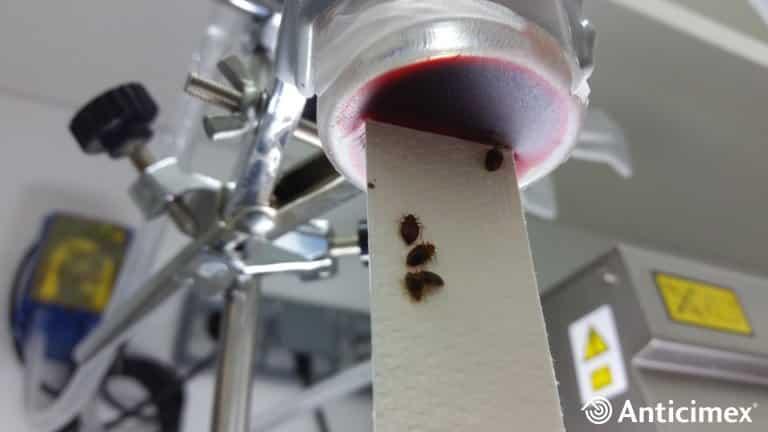 Laboratorio de chinches en Anticimex