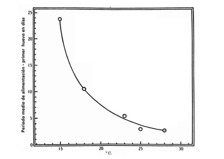 Figura 7. Duración media del período desde la primera alimentación de adulto hasta la primera puesta de huevo. Los machos y hembras alimentados y emparejados al mismo tiempo. Datos en la Tabla 7.