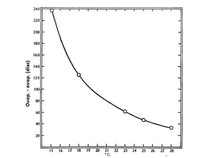 Fig. 8. Periodo medio desde ovoposición a ovoposición: periodos de prealimentación fijados arbitrariamente. Datos en la Tabla 8.