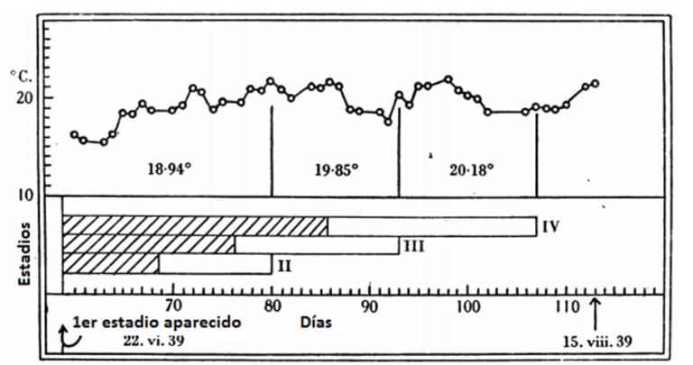 Figura 9. Las temperaturas (por encima) en la cabaña experimental entre junio y agosto 1939: por debajo, las fechas en las que uno esperaría que aparezcan estadios sucesivos (II, III, IV), y las fechas de ocurrencia observada. esperados; observados.