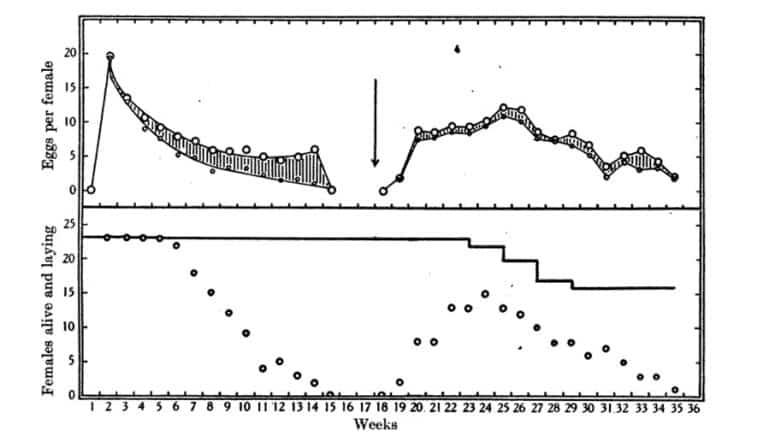 Fig. 16. Huevos por chinches hembra por semana, número de hembras ponedoras y número de hembras vivas a 23 ° C, 90% RH Top: O = total de huevos, o = huevos normales. Bottom: o = hembras ponedoras; – = hembras vivas. Las áreas sombreadas representan los huevos estériles. Las hembras apareadas pero después mantenidas sin macho hasta la semana décimo octava (flecha). A partir de entonces un macho de forma permanente con la hembra. Chinches alojadas individualmente o en parejas por tubo y alimentadas una vez por semana. Datos en las Tablas 30 y 31.