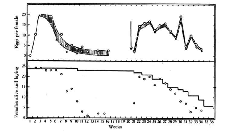 Fig. 17. Como la figura 16 pero alimentados dos veces por semana. Datos en las Tablas 30 y 31.