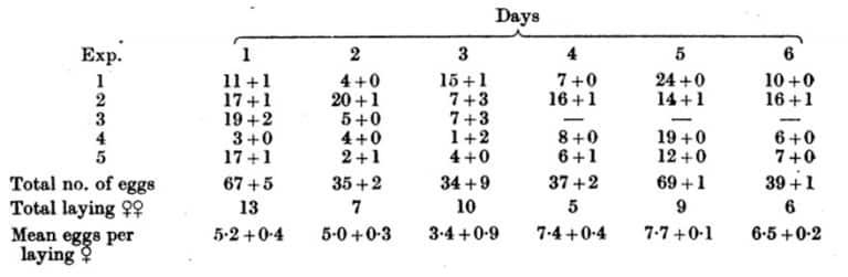 Tabla 35. Huevos de chinches puestos por grupos diarios de cinco hembras fecundadas por el mismo macho soltero.