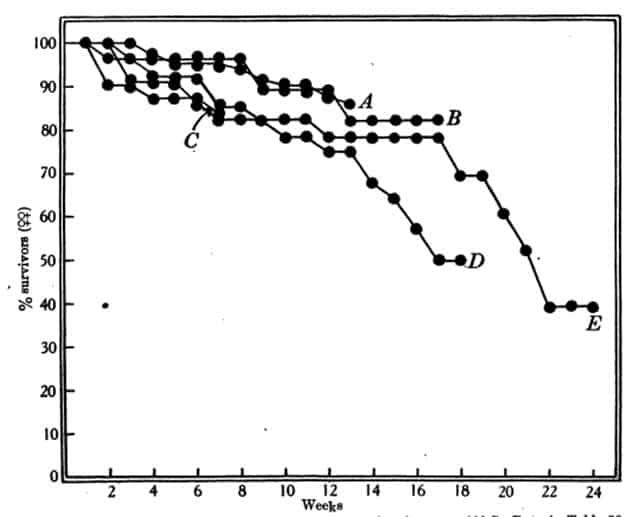 Figura 21. Mortalidad de hembras adultas de C. lectularius en lotes cultivados a 23ºC. Datos en la tabla 39. A, B, etc, lotes separados, todos de un solo lote (Beckenham). Lotes B a E criados cada uno del anterior. Chinches menores de 7 días de edad en el inicio.