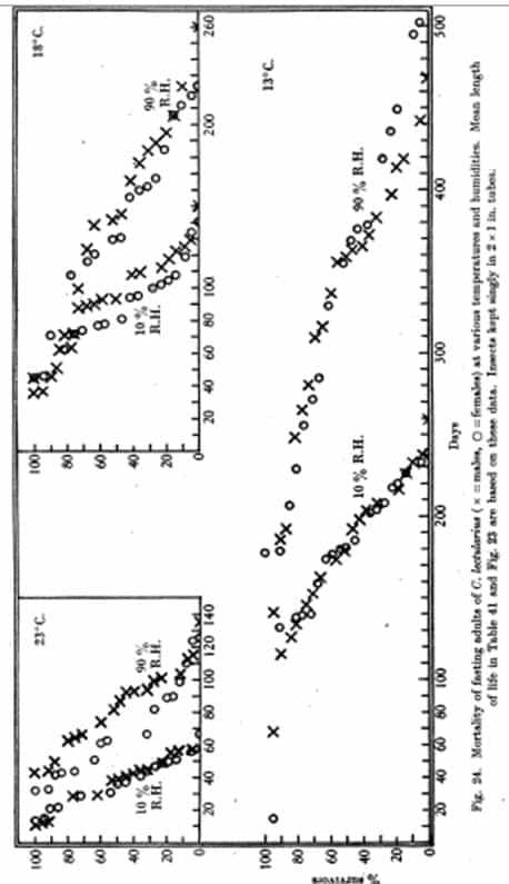 Fig. 23. Duración de la vida de adultos en ayuno apareados de C. lectularius (machos y hembras juntos), alimentados una vez en conejo, en relación con la temperatura y la humedad media. Fechas de longevidad desde la alimentación. Las líneas de puntos casi se unen a las dos observaciones a cada temperatura y no indican la longitud de la vida a humedades intermedias (tabla 41).