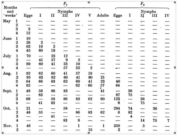 Tabla 55. Oviposición, eclosión y tiempos de muda de la progenie de los adultos y ninfas que invernaron de una habitación similar a la de 50 Oakworth Road