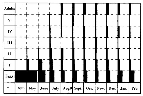 Figura 33. Esquema hipotético de crecimiento de la población en un ambiente similar al de Sutton Dwellings. Las áreas negras representan las proporciones de los distintos estadios, como porcentajes de la progenie total. Abscisa para cada semana representa el 100%. Véanse las Tablas 57 y 58.