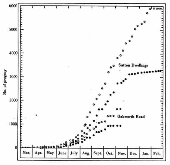 Figura 34. Crecimiento de la población hipotética de Oakworth Road y Sutton Dwellings en términos del número de organismos. 0 = progenie total, # = insectos chupadores totales (es decir, excluyendo los huevos). Véase la Tabla 59.