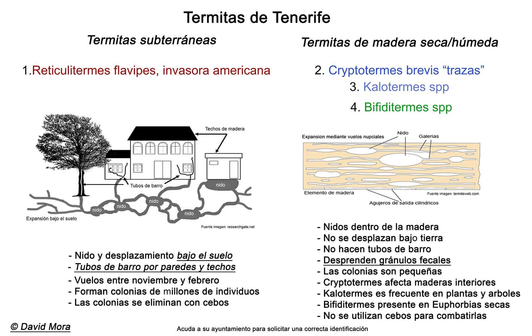grafico-termitas-tenerife-2