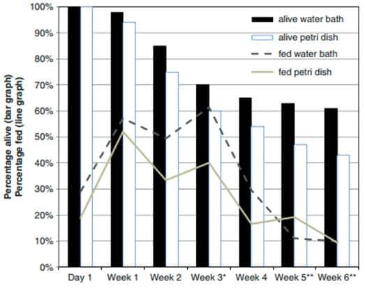 Figura 3. Porcentaje de cepa de chinches de laboratorio que se alimentan y que estaban vivas (n = 100) después de la oferta semanal de una comida de sangre de 15 min. * El porcentaje alimentado fue significativamente diferente (P ≤ 0.05); ** El porcentaje vivo fue significativamente diferente (P ≤ 0,05).