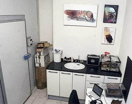 laboratorio de termitas en Barcelona