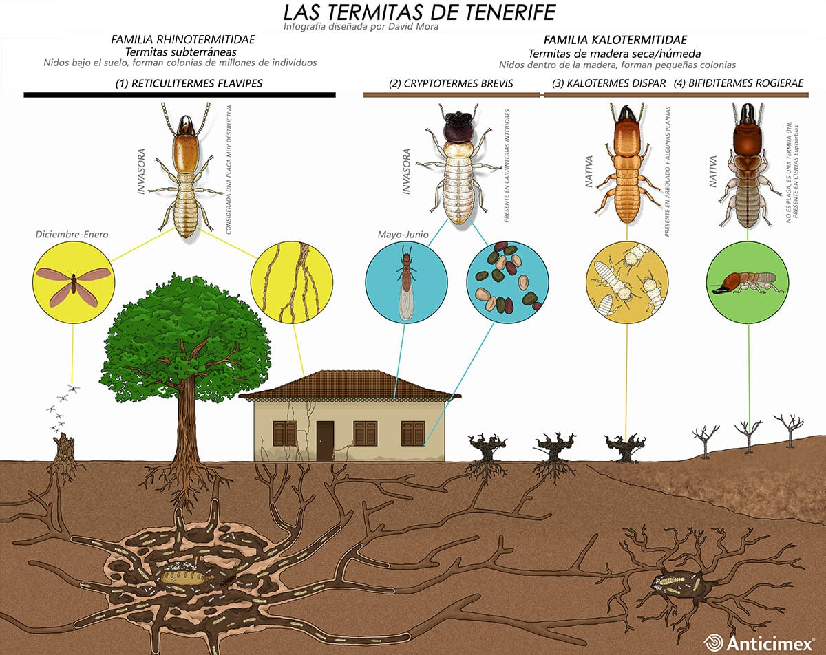Las termitas de Tenerife