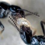 nacimiento-termita