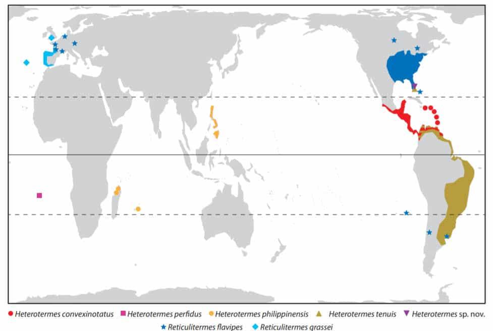 (Figura 4) termitas invasoras