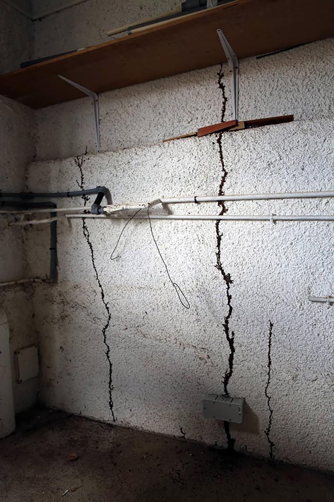 Por lo general este tipo de tubos de barro a través de los cuales se desplazan suelen estar en el interior de las paredes, fuera del alcance de nuestra vista.