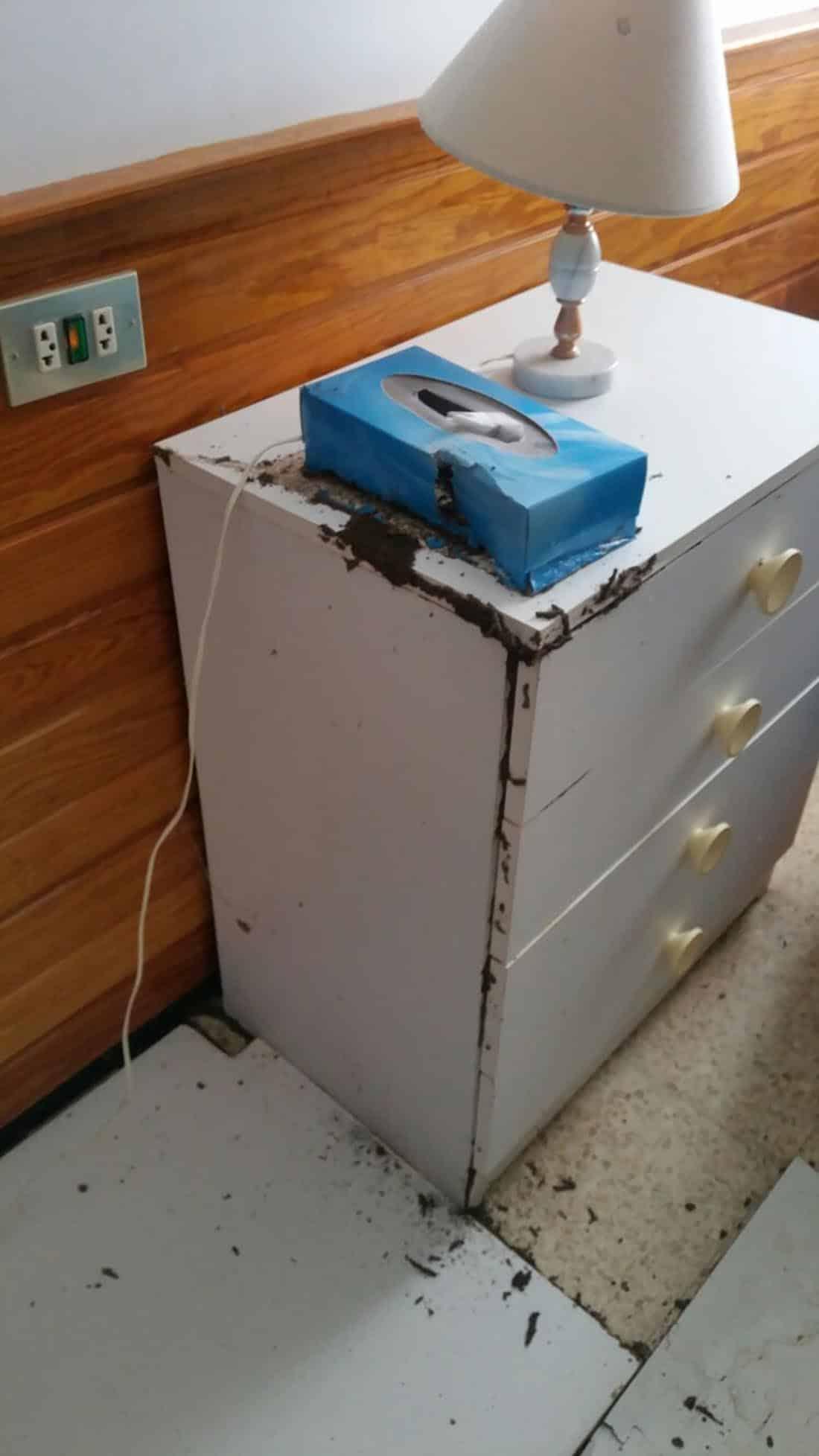 Vivienda «tomada por las termitas». Mueble -y caja de clinex- atacado por la termitas.