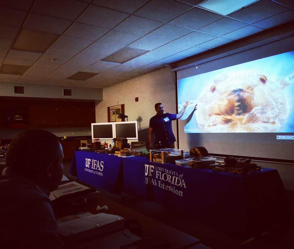 universidad-florida-termitas