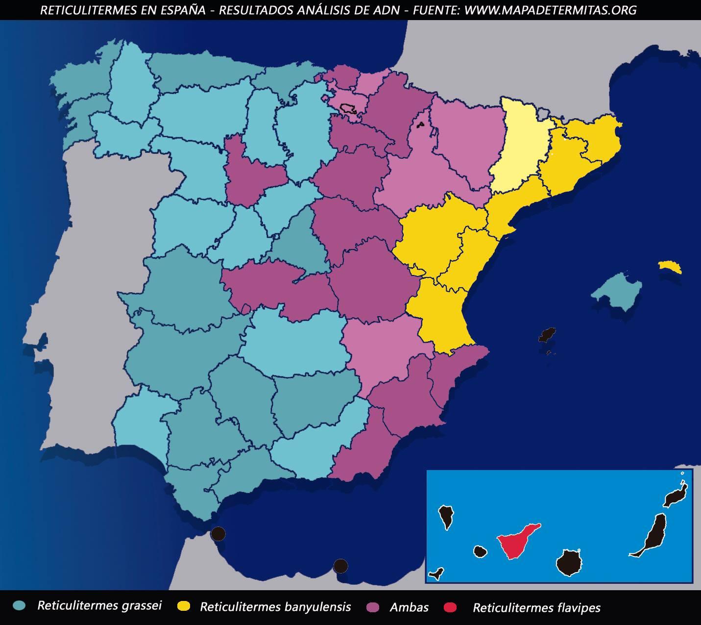 Reticulitermes en España