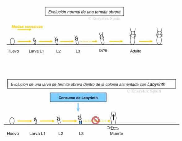 efectos de los cebos en las termitas