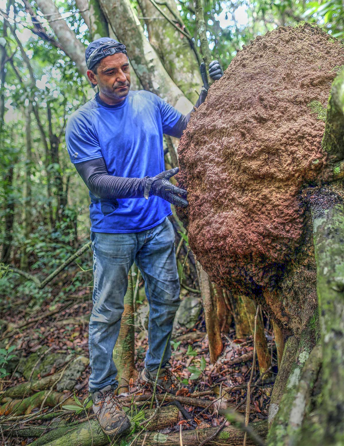david-mora-termitas-jamaica