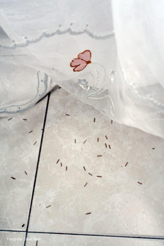 alas de termitas