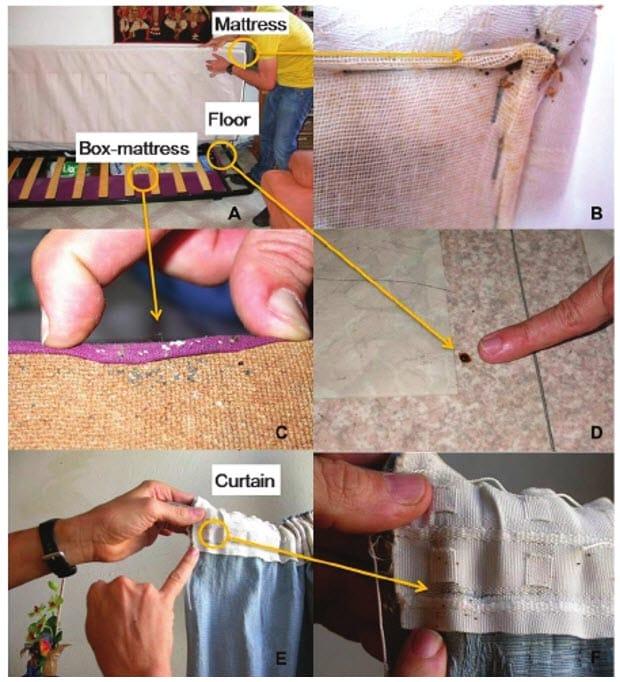 Figura 4. Escondites de chinches de la cama (Cimex hemipterus o Cimex lecturarius). Una operación eficiente de búsqueda y destrucción contra las chinches (A) debe empezar por eliminar el colchón (B) y la base de resortes (C), explorando el suelo cerca de la cama (D) y las cortinas (E, F) para identificar y destruir los huevos, ninfas y adultos.