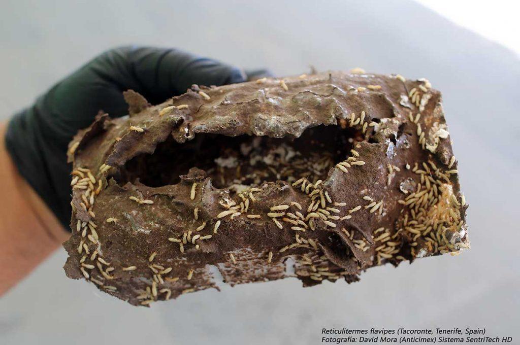 cebo para termitas del sistema sentritech