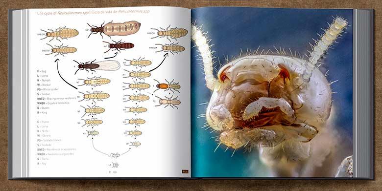 libro-termitas-660-fotografias