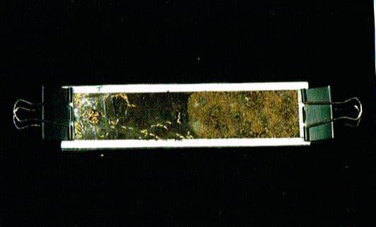 Ensayos de labororatorio demuestra la repelencia al fipronil por parte de las termitas