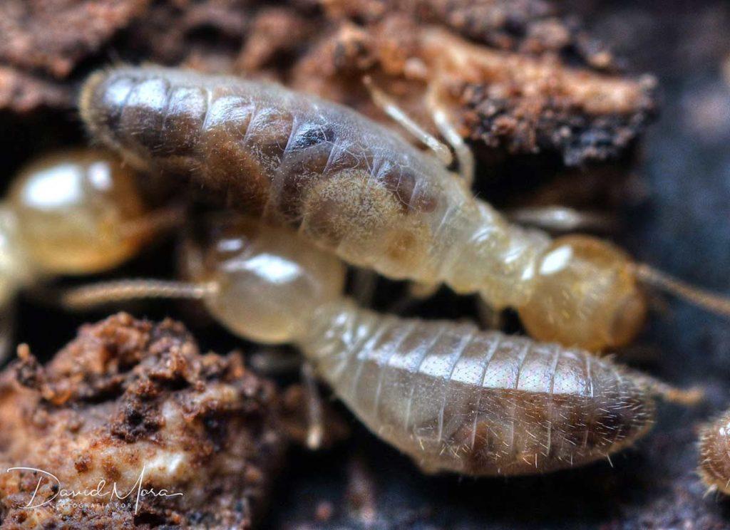 termitas-en-españa