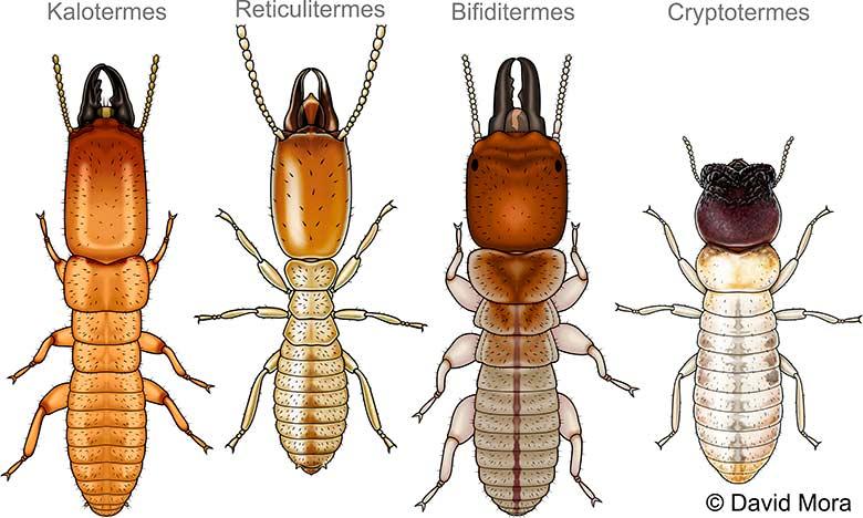 termitas-españa
