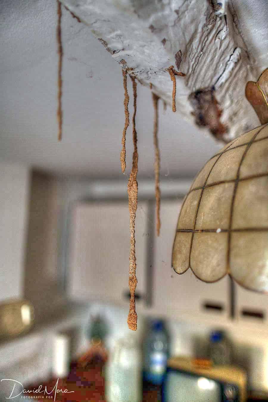 termitas-estalactitas