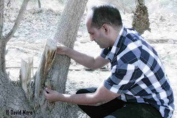 david mora en israel