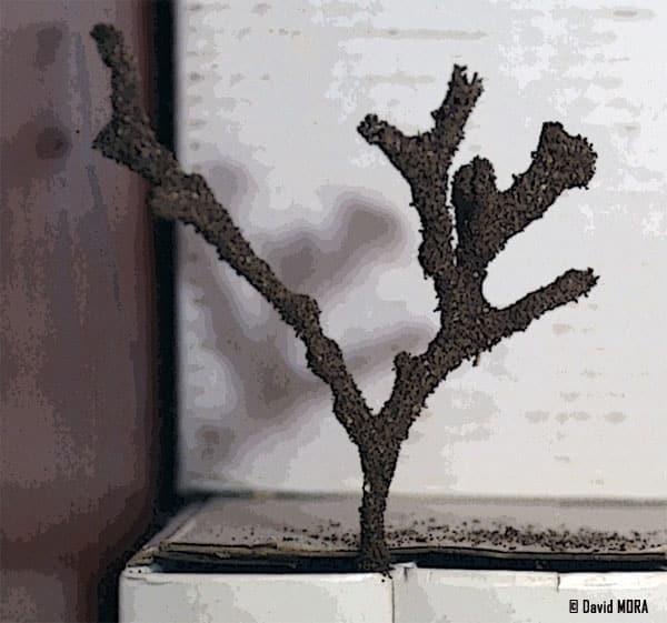 Microcerotermes Palestinensis Spaeth, 1962