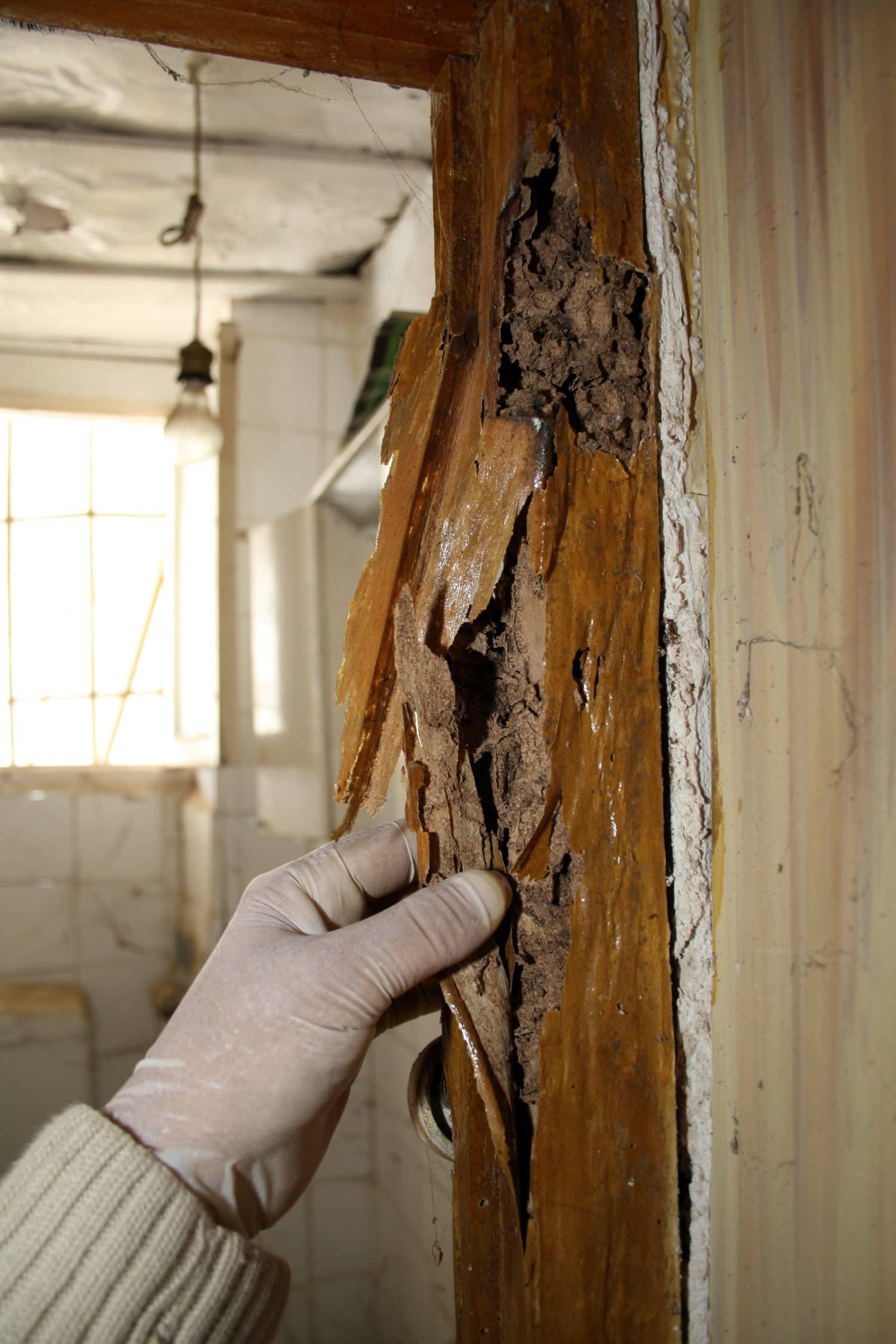 Qué esperar durante una inspección de termitas